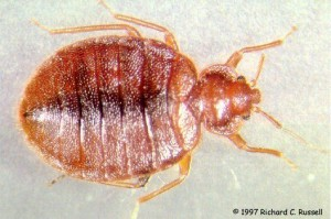 bed-bugs-heat-treatment