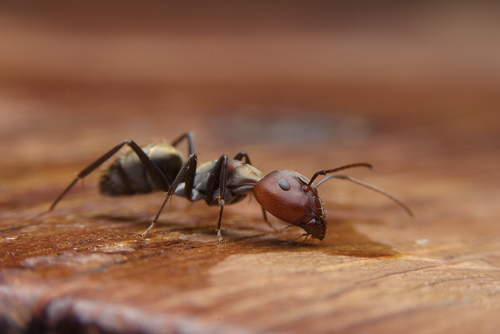 Why Are There Ants In Your Home?