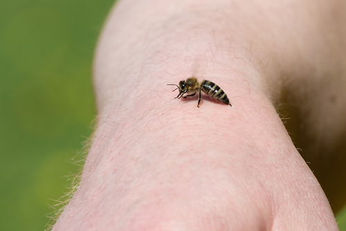 Stay Away from These Stingers! Bees and Wasps to Avoid