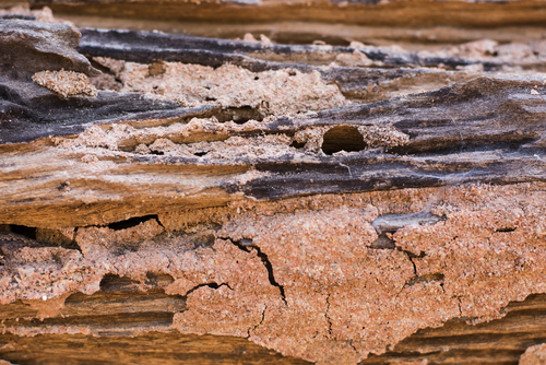 Your Options for Professional Termite Control