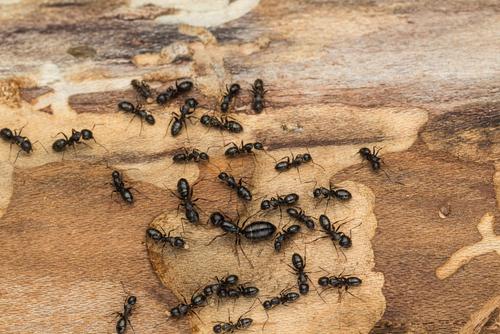 Ants Vs. Termites [INFOGRAPHIC]