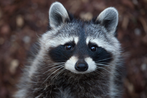 Pests Are More than Just Bugs: Dealing with Furry Pests