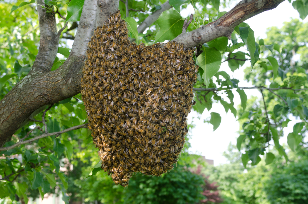 Why Live Bee Removal Is the Right Choice
