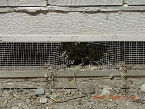 Rodent Proofing/Exclusion - Entry points in broken vents