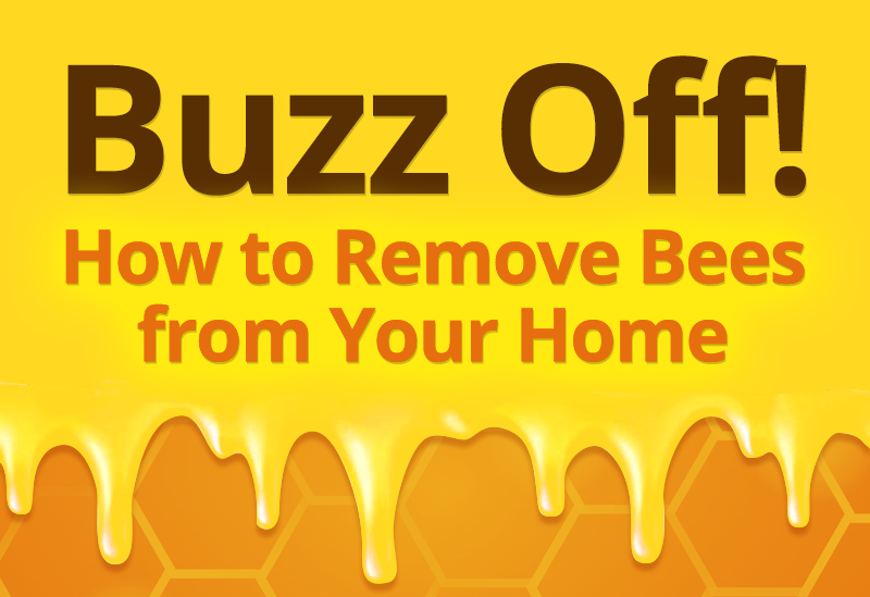 Buzz Off! How to Remove Bees from Your Home [INFOGRAPHIC]