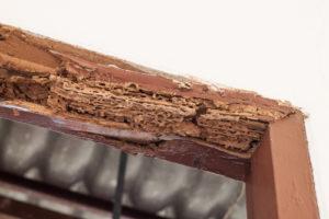 wooden door frame that has termite damage