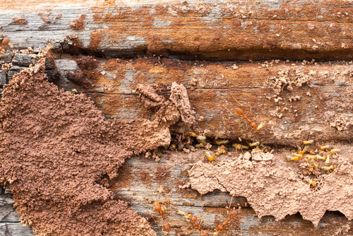 6 Ways You're Inviting Termites into Your Home