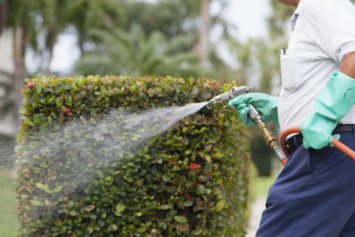 3 Benefits of Hiring a Pest Control Company