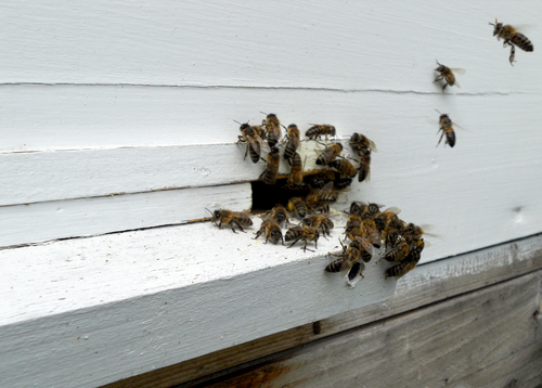 Your Home is in Danger with These Pests Around